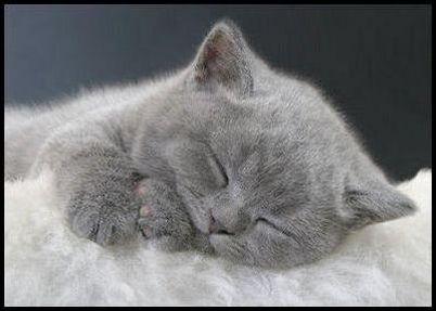 貓咪——最佳寵物