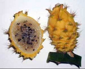 集健康、美容、防病強身與一身的水果——火龍果