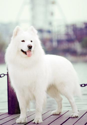 狗狗毛髮日常護理