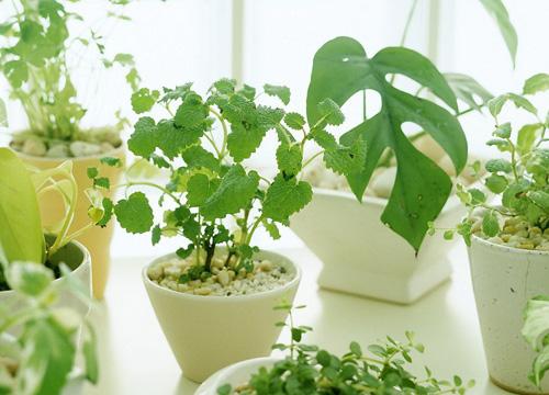 給室內加點綠色,清新空氣