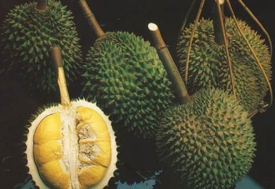 水果王——榴蓮的那些事