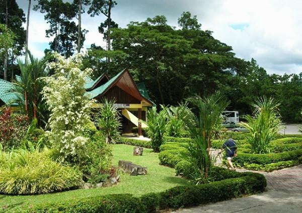 馬來西亞逛原始森林