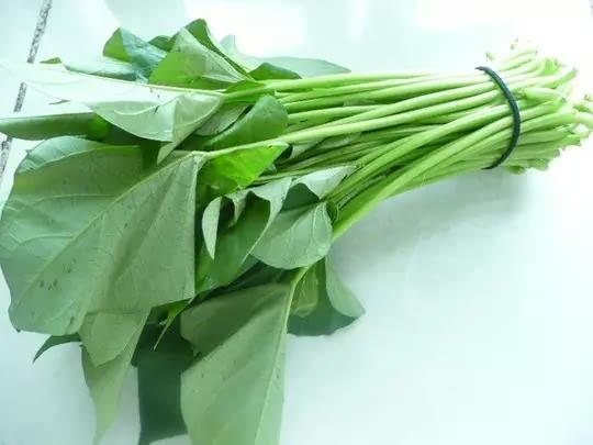 又一廉價長壽菜——番薯葉