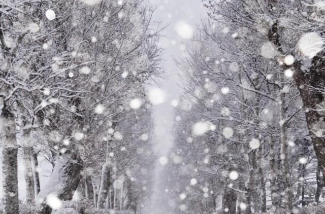 北海道享受冬天