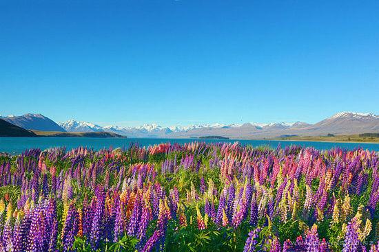 新西蘭打工旅遊簽證,你心動了嗎?