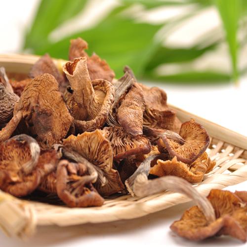 增強免疫力找榛蘑