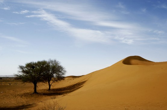 沙坡頭走沙漠