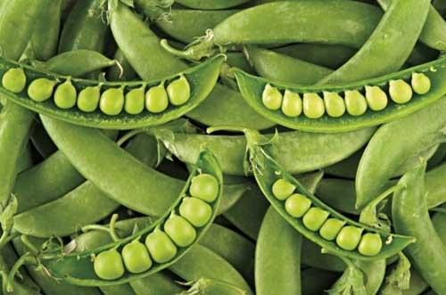 春天是個吃豌豆的季節