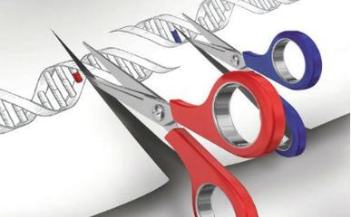 基因編輯或將迎來發展