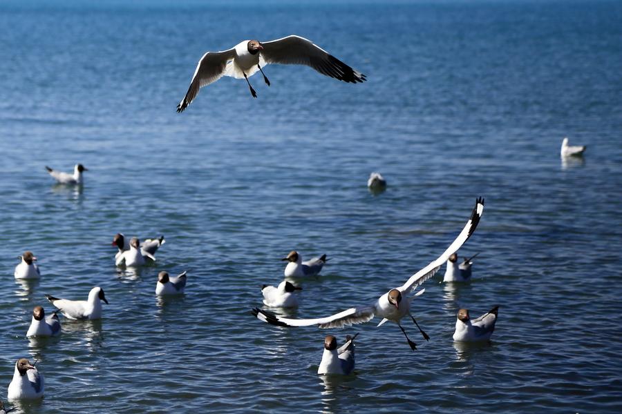 正值青海湖觀鳥季,約嗎?