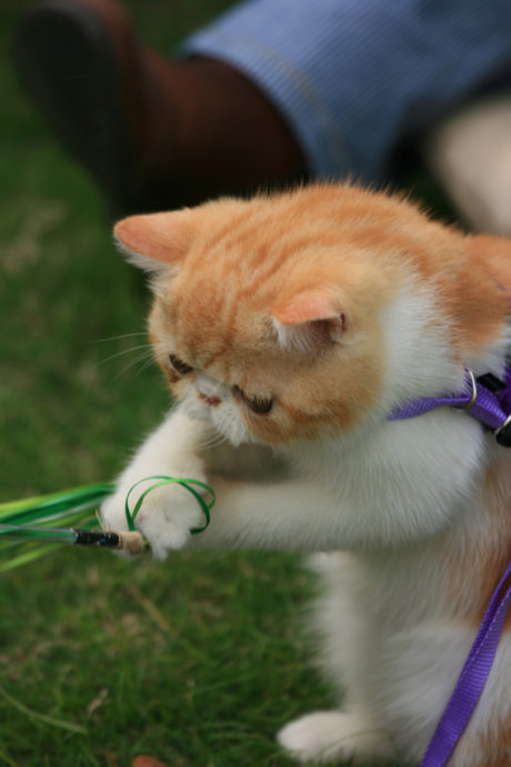 不知道遛貓你就落後了