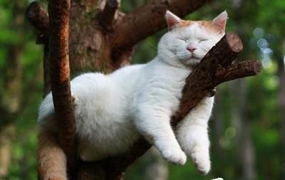 適合跟你一塊懶的貓