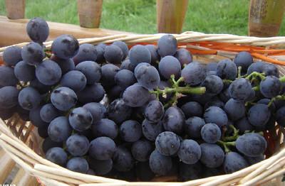 秋天多吃葡萄好處多