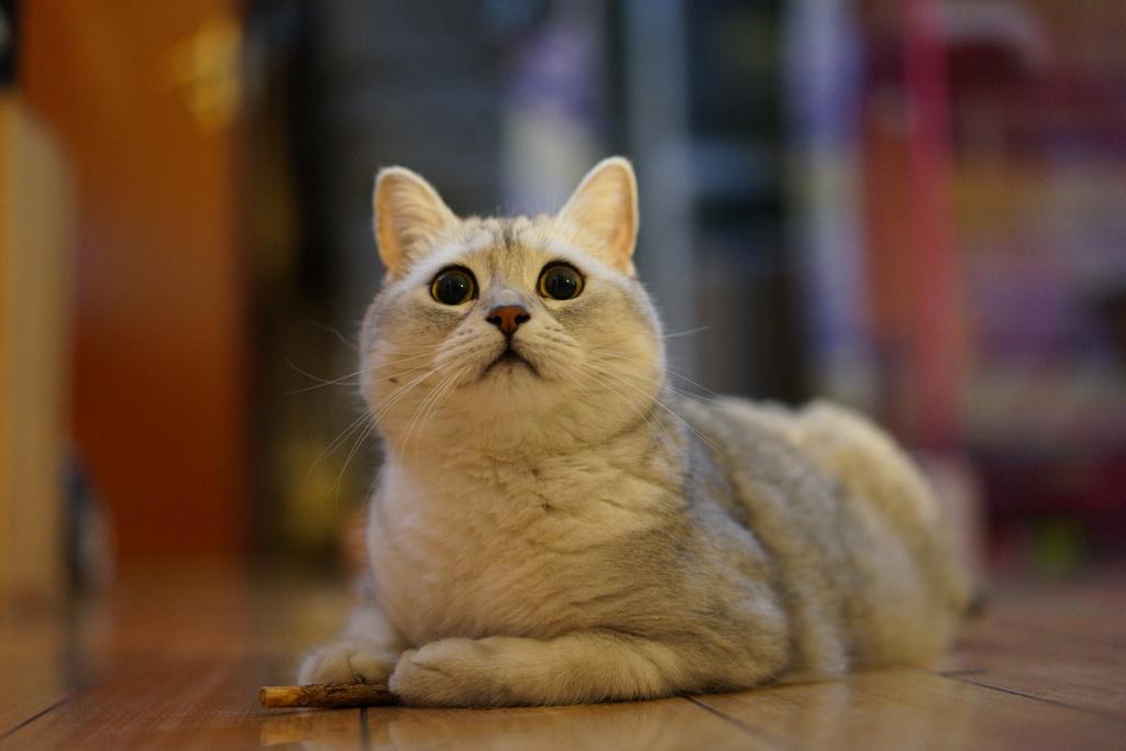 如何讓貓行人high起來