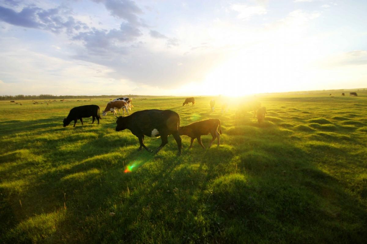 澳洲農業增長空間巨大受外資追捧