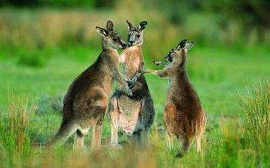 在澳大利亞與美食不期而遇
