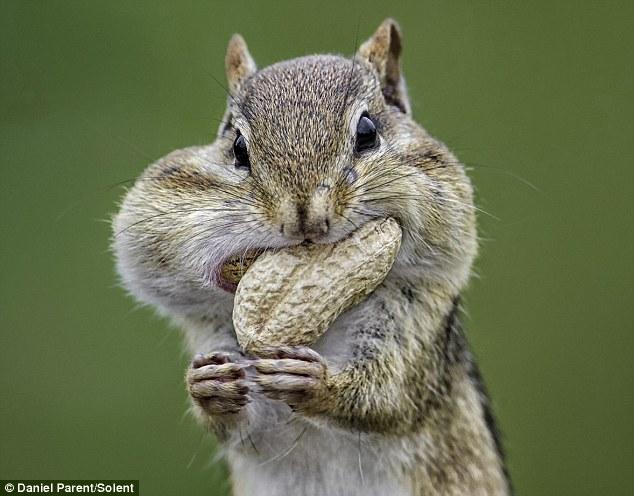 松鼠飼養注意事項