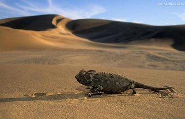納米比亞,勇敢的大地
