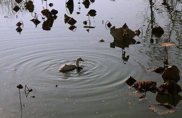 舒溪河畔,靈山秀水間,讓你感受不一樣的情懷