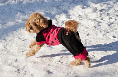冬季狗狗護理知識
