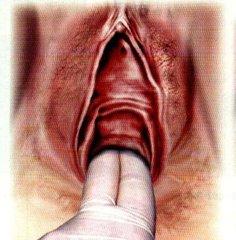 陰道可能是現代女人最後的禁忌