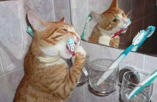 刷牙注意事項
