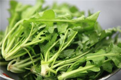 春食野菜當屬蒲公英