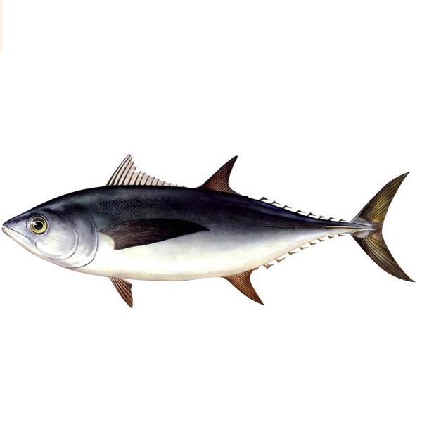 金槍魚降血壓 預防貧血