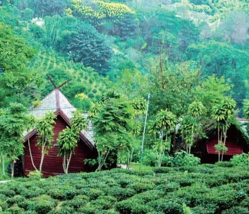 金三角地區已成為泰國北部的一個著名旅遊地