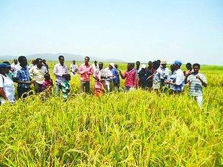 """""""一帶一路""""框架下,國際農業合作大有可為"""