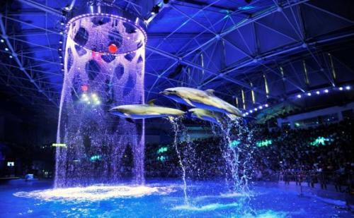 上海海昌海洋公園名稱確定 暑期正式開門納客