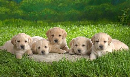狗年話狗:香港寵物犬飼養面面觀