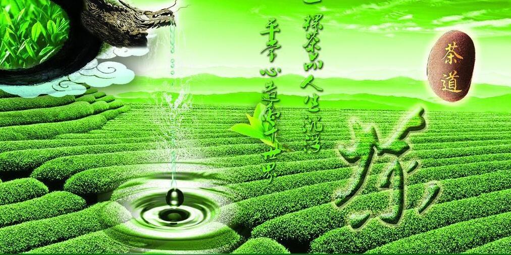 福建茶鄉——寧德 ▪ 茶香世界