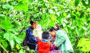 粵春遊熱賞花客增五成半   親子遊成熱點