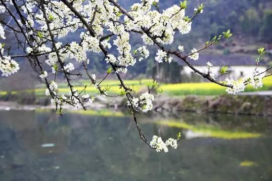 江南,是春天最美的詩