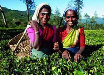"""斯里蘭卡原名""""錫蘭"""",語意為""""光明富饒的樂土"""""""