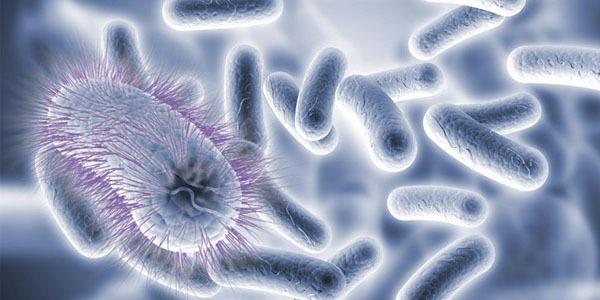 """我們能否培養和人體""""互惠互利""""的細菌對抗感染?"""