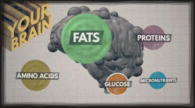 吃得不對不光會變胖,竟然還會變笨!
